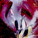 fekete tulipan