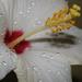 Cseppek a virágon