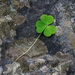 Album - Írország