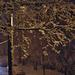 utca télen