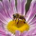 Méhek színek - 1