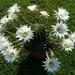 16 virág