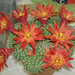 Marcipán kaktusz