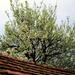 Tető és fa