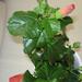 növények 028