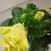 növények 030