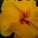 növények 004