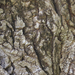 Száz éves fa törzse