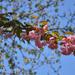 Fák, virágok, fény