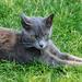 Restin on the grass