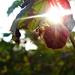 Album - Növények-Természet