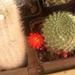 Album - Kaktuszok