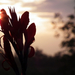 Reggeli virág