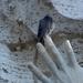 melyik ujját harapjam