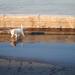 árvízi pancsolás