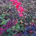 őszi színek, a sötétebbek