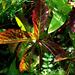 kísérletek, napozó levelek