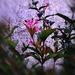 különleges növények, október közepi virágok