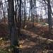 tájképek, hatalmas billing-kolónia van a fák között